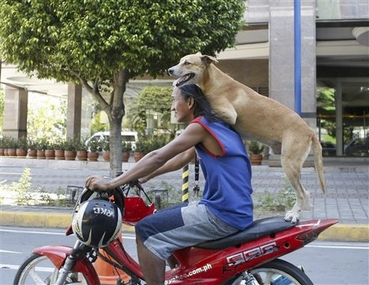 Dog Riding on Motorcyc...