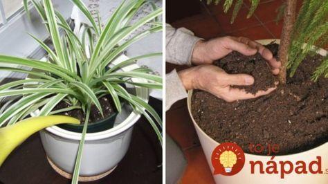 Geniálny trik, vďaka ktorému vydržia izbové rastliny bez zálievky až 2x dlhšie!