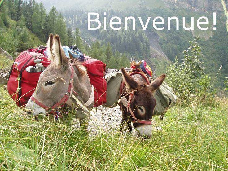 ânes en Vanoise