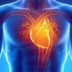 Infarctus et insuffisance cardiaque : un traitement par cellules souches en cours d'essai en France