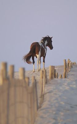 Near Future Plans: Chincoteague Island! Critter Sitter's Blog: My Favorite Island Photos