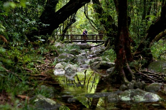 Head into the rainforest to explore the spectacular Mossman Gorge. Kick your day off at the new Mossman Gorge Centre and join one of the Ngadiku Dreamtime Walks.