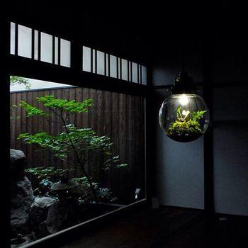 和の空間に浮かぶ姿は、どこか神秘的な雰囲気を醸しています。