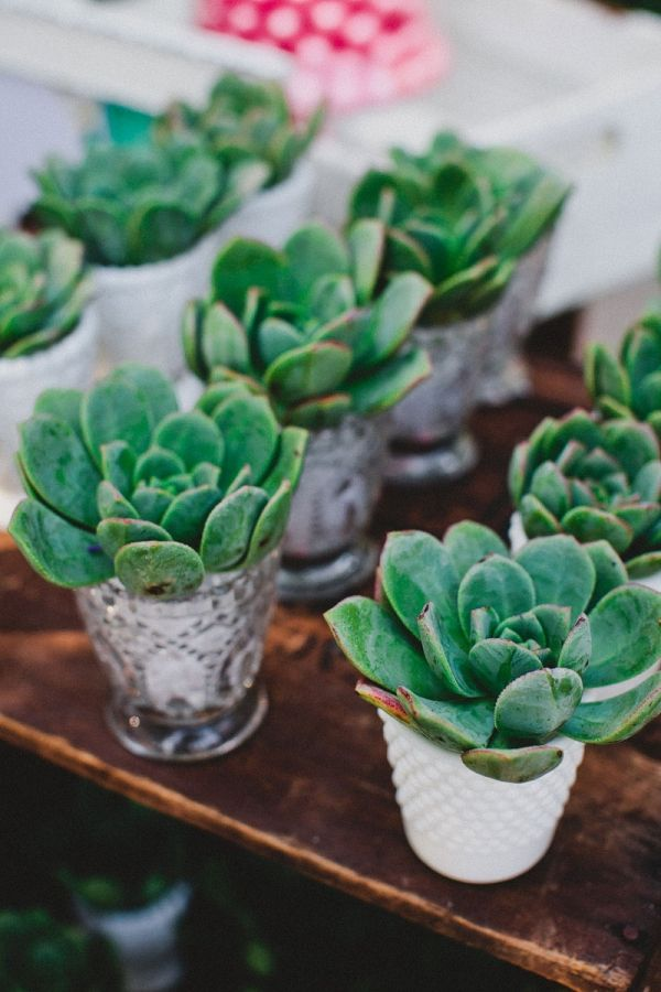 """I really love this idea - a favor and a place marker in one. Cute with a little """"thank you for joining us"""" on the reverse of the name tag. I like the idea of giving a living something to take home, and the succulents will also be a great addition to the decoration of the tables."""