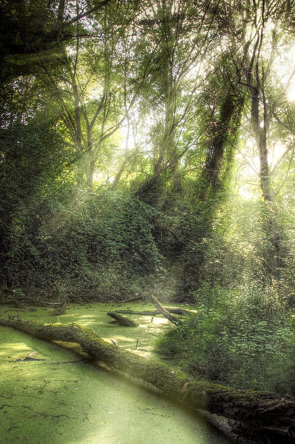 ✮ Rays of light falling through the mist and trees in the swamp