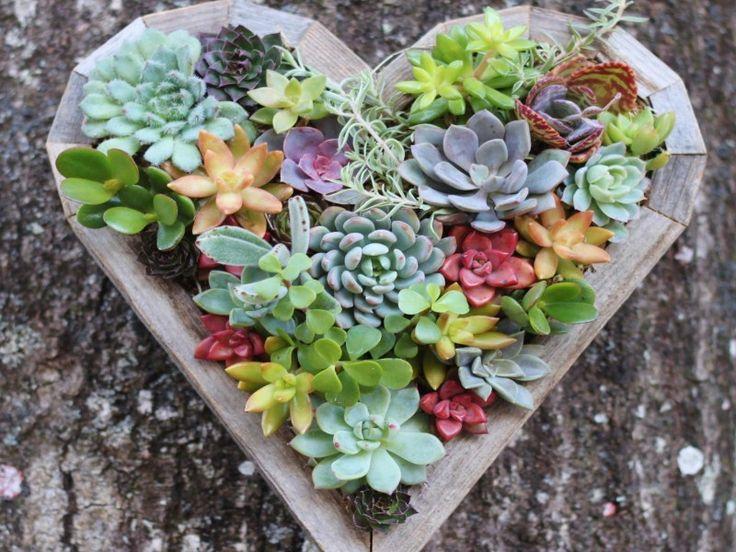 1000 id es sur le th me jardin de plantes grasses sur for Au jardin de mon coeur