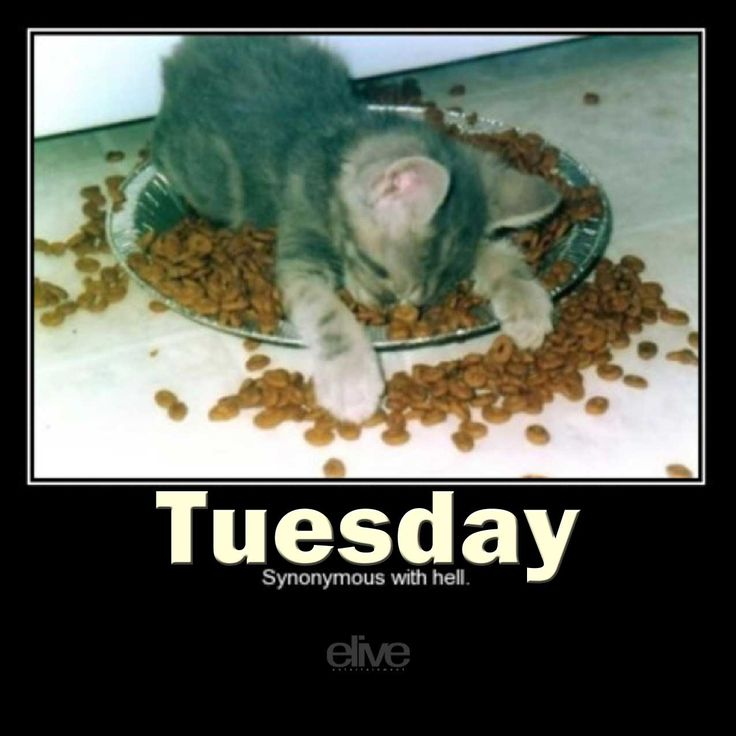 100 best TICKLE ME TUESDAYS! images on Pinterest