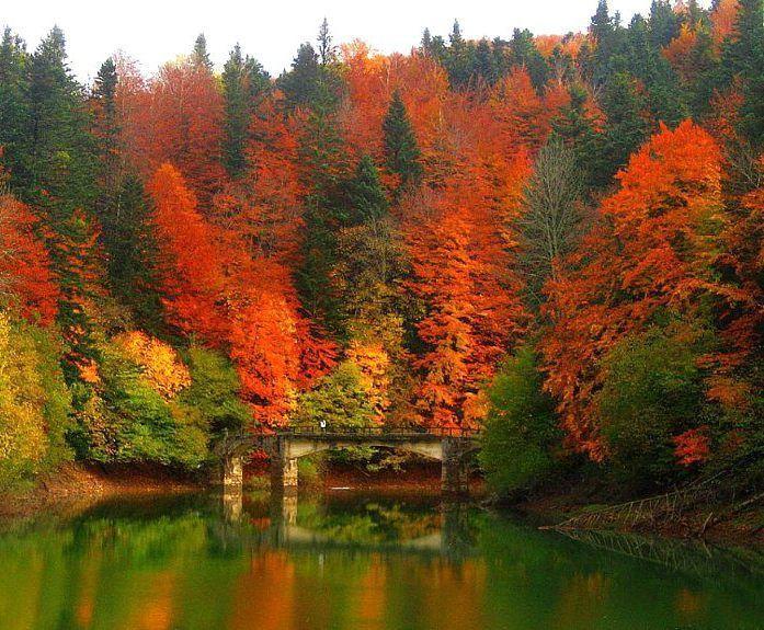 Si no te gusta el otoño es porque nunca has visitado la selva de Irati en Navarra | Verne EL PAÍS