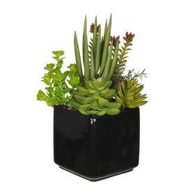 Succulent Desk Top Plant in Pot