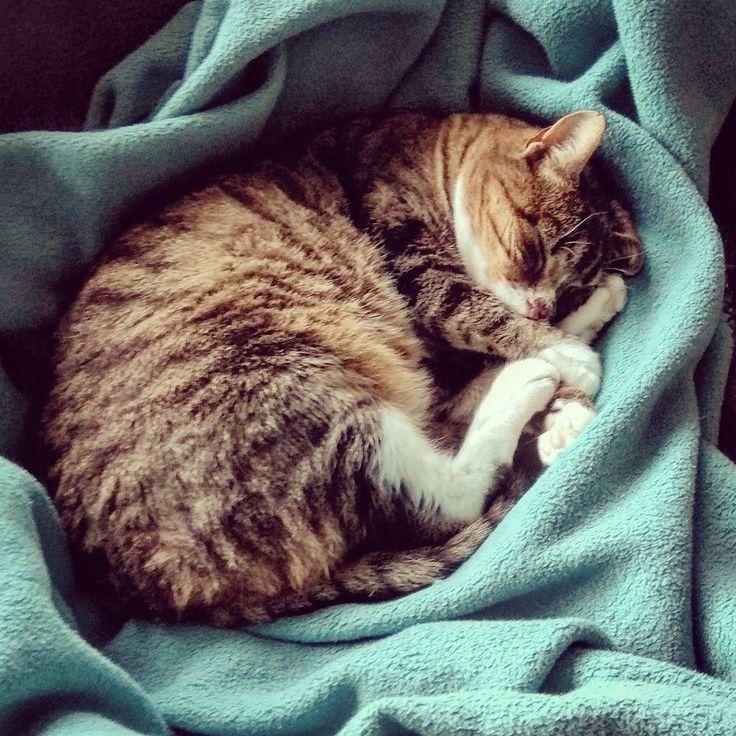 Jetzt noch ein schnelles Schläfchen und dann habt ihr die Bescherung   Mehr unter http://ift.tt/2fJHY36  #derhandbetrieb #cat #katze #catsofinstagram #cats #katzenliebe #catstagram #katzen #instacat #catlover #katzenleben #catoftheday #love #cute #kitty #catlovers #instagood #beautiful #cutepic #cutekitty #sleep #sleepy #goodnight #cuddling #cuddlingpets #sweet
