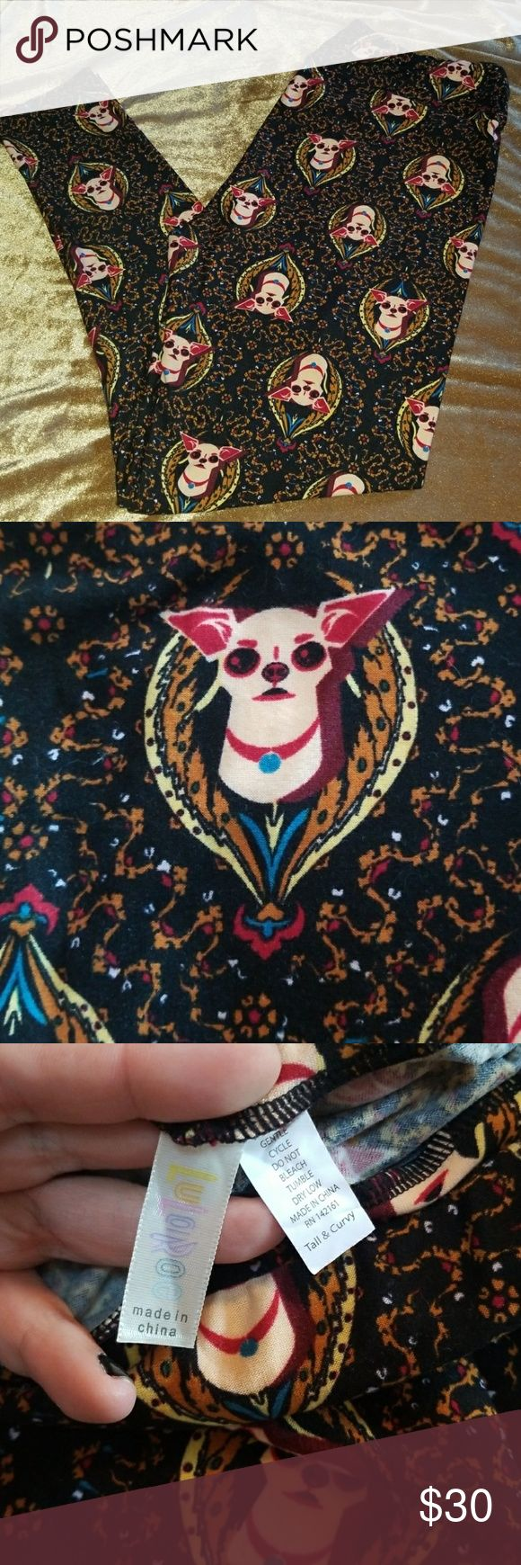 lularoe chihuahua leggings 25 best ideas about curvy fit on pinterest curvy body 3530