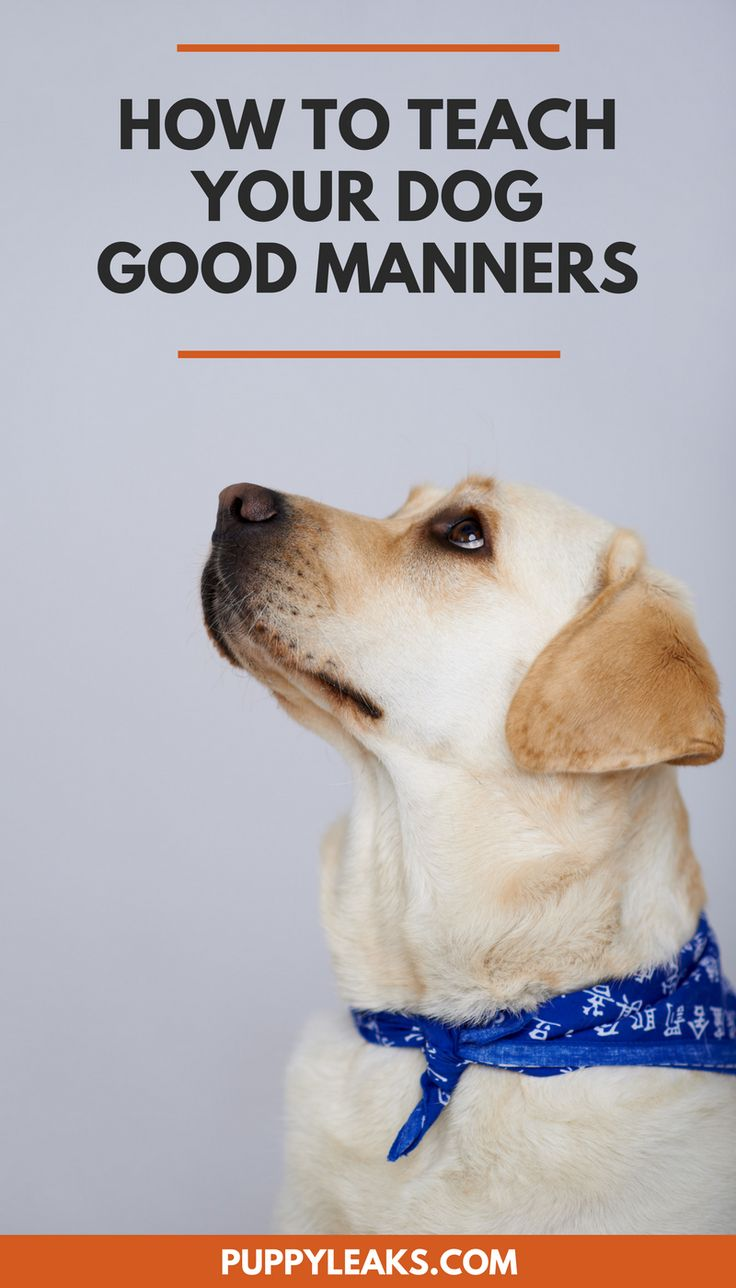 Does your dog have bad manners? How to teach your dog good manners and improve their impulse control.