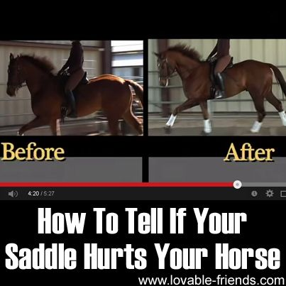 Research has shown that an improperly fit saddle may trigger undesirable behaviors and even injury to horses. click the link to watch the video and learn more.