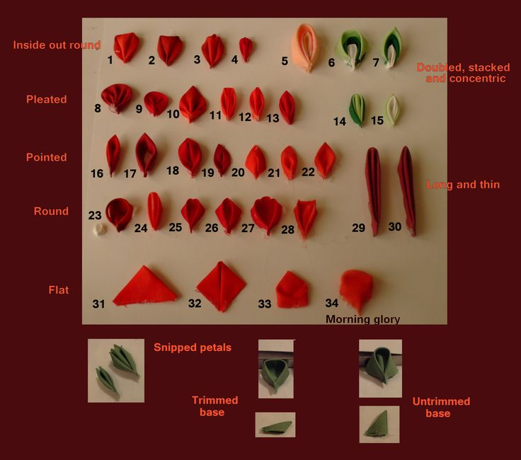 Chart of petal types (you may have to click where the image should be in order to make it appear)