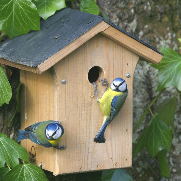 Portland Slate Roof 28mm Nest Box-£16.95 Delightful wooden box with a slate roof. A box with a 28mm entrance hole will attract Tree Sparrows, Blue Tits, Coal Tits and Great Tits.