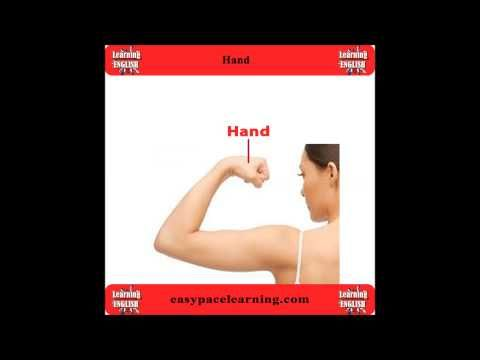 Learning body parts video Learn the English vocabulary for body parts
