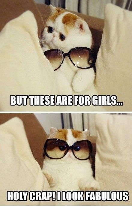 Haha I laughed waaay longer than necessary. What a CATastrophe.