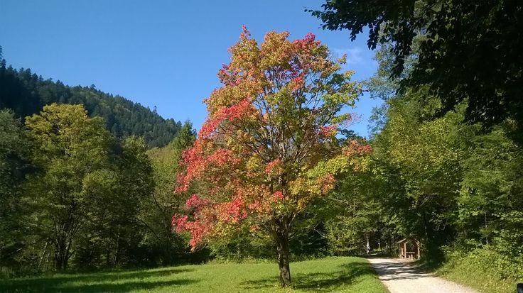 Noclegi w Szczawnicy Pod wierzba: Szczawnica jesienia