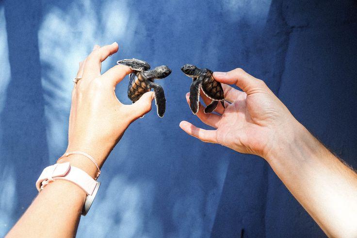 Visit a turtle hatchery in Sri Lanka! SEEK SEE TRAVEL