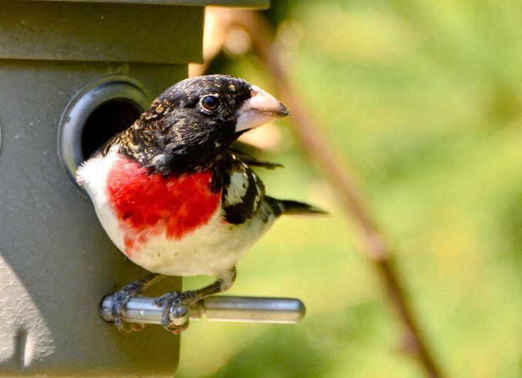 Photo Adventure Guild: Birds