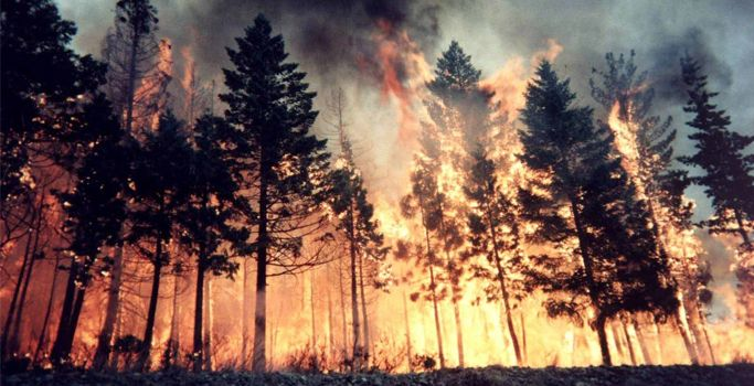 How To Control Wildfire Like Natural Calamity