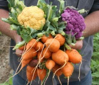 Five Organic #Gardening Best Practices for the Beginner