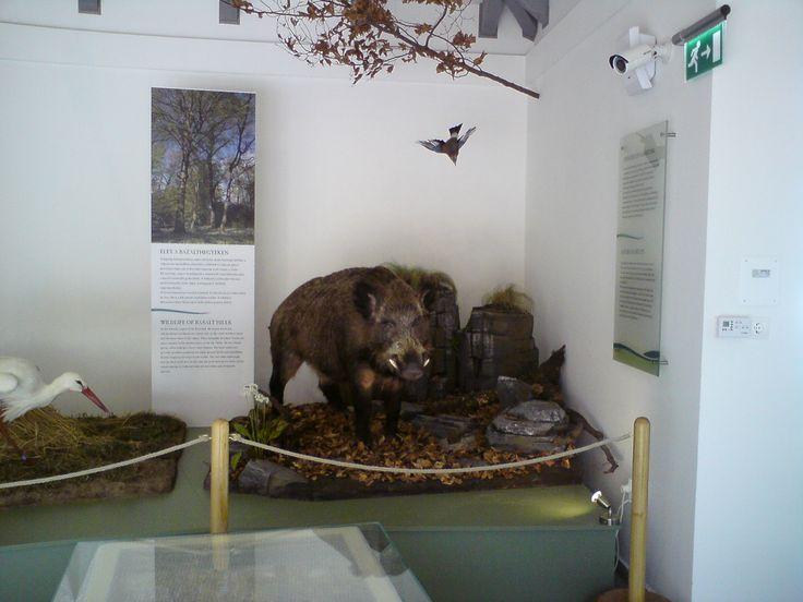 Gyenesdiás  Természet Háza Látogatóközpont