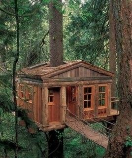 Tree house to live in