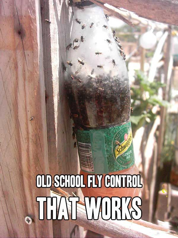 Old School Fly Control That Works I am not sure if it is just a problem this year but the flies have been on the apocalyptic scale around my house. I can't seem to get rid of them no matter what I spray or how many sticky fly traps I hang up. I was at my whits end when I found this amazing old sch…