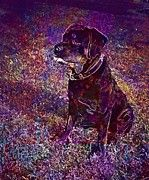 "New artwork for sale! - "" Rottweiler Puppy Dog Pet Animal  by PixBreak Art "" - http://ift.tt/2v7vgou"
