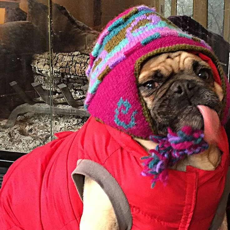 "There was that time I was at da ski lodge and threw everyone da raspberries cheers 🍻!"" Pugsley Luigi   #rasberry #cheers #tongue #ski #pug #pugs #derp #dog #dogs #snowboarding #pugmania #fireplace #photo #photooftheday #dailypug #puglife #puglove"
