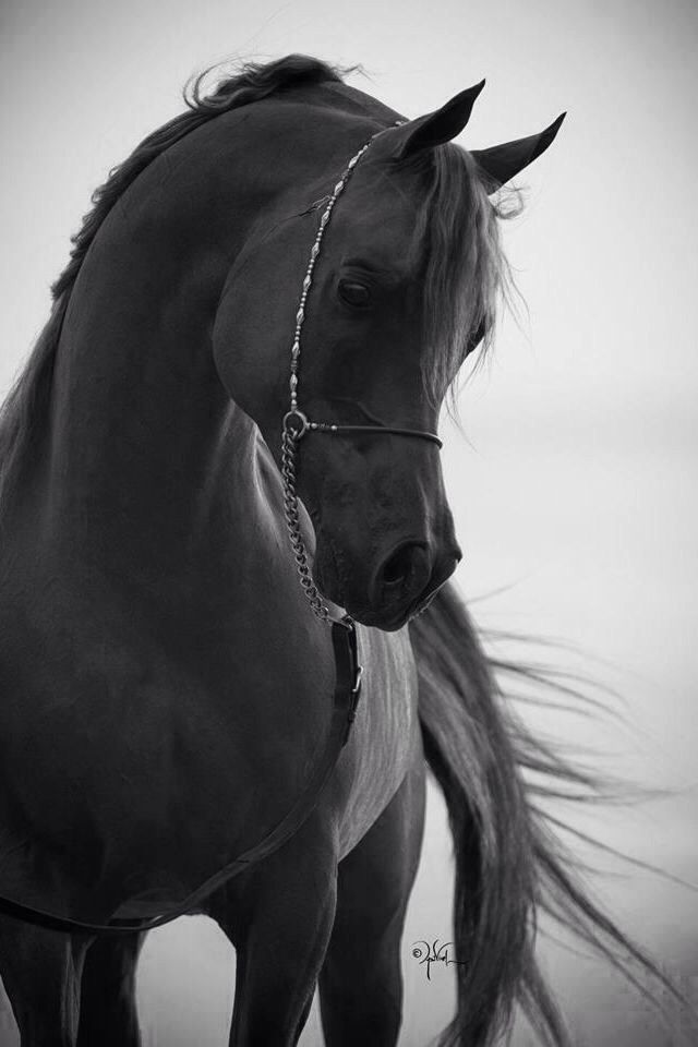 Precious horse face, majestic and magical.