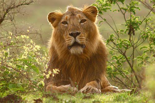 Uttar Pradesh Eyes Wildlife Tourism - http://www.easydestination.net/blog/item/uttar-pradesh-eyes-wildlife-tourism