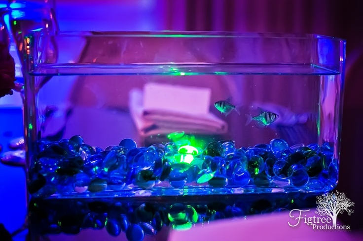 1000 images about wedding neon on pinterest happy for Neon fish tank