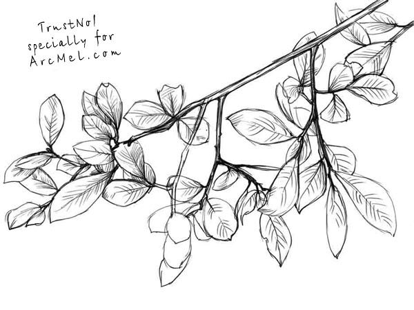 How to draw branches step 4 | art | Pinterest | Trees, How ...