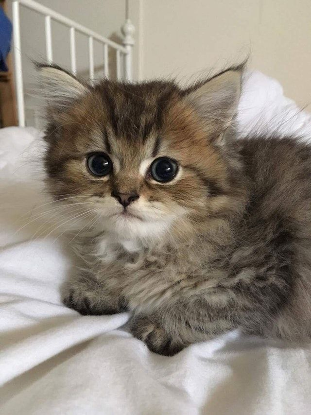 A Subreddit For Cute And Cuddly Pictures Bebes Chats Kittens