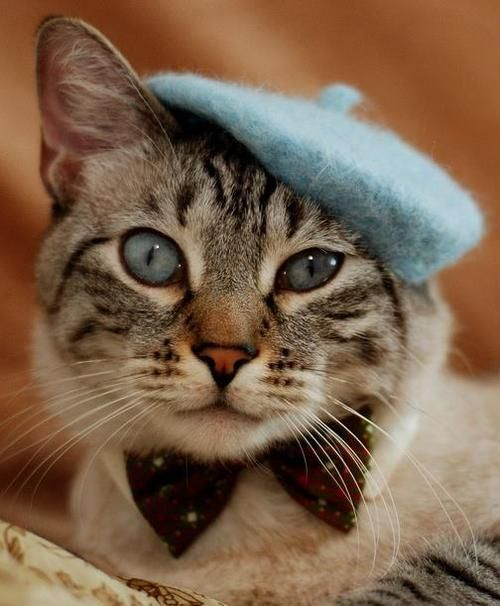 Comment allez-vous?                 (KO) I'm fine, Pooky, how are you? (No idea what those words in French may mean. I just hope it's something nice and/or friendly). Sweet beret clad kitty, looking spiffy!