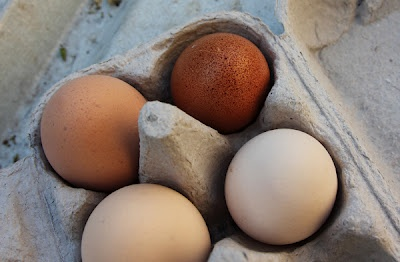 Keeping Chickens: What to feed chickens