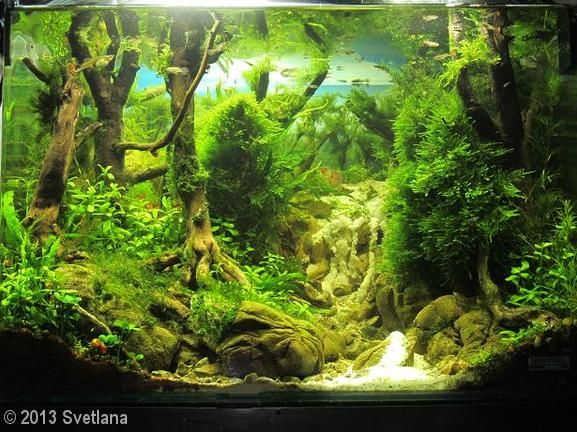 Phenomenal 100 Aquascape Ideas https://meowlogy.com/2017/03/27/100-aquascape-ideas/ For a diverse and more successful aquarium, various different kinds of plants ought to be used. Inside this case always elect for plastic plants or you could say artificial plants that are available in a range to pick from. For this reason, you need to put them under plants that are taller. In case you are growing high maintenance plants you might want to think about an aquatic soil or clay.