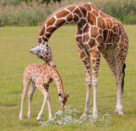 Visit Cape May County Park and Zoo