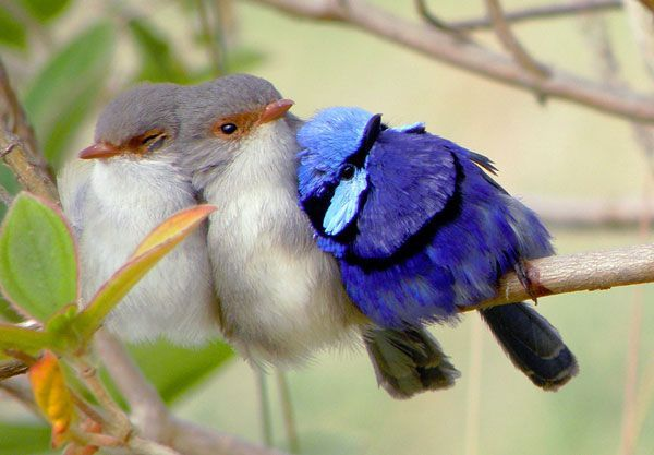 This amazing Birdy Family Photo, just made my day, such infinite beauty and unconditional LOVE...
