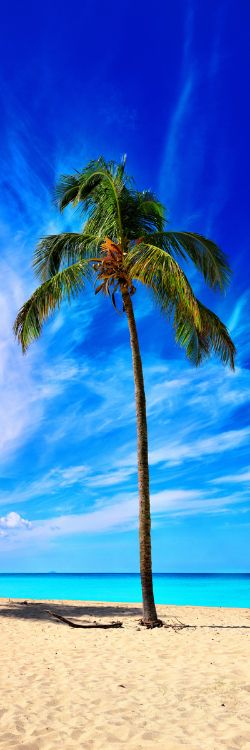 Alexander Vershinin - The Chosen One #brazil #sea #vacations #travelers