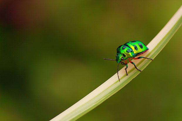 Google Image Result for http://www.photographymad.com/files/images/negative-space-insect.jpg