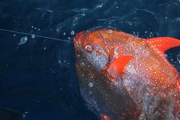 Encuentran al único pez de sangre caliente