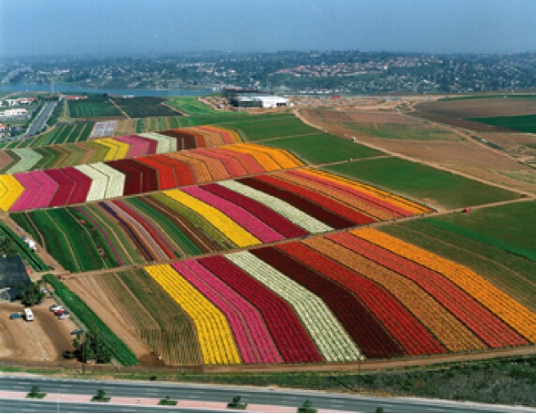 Beautiful Places Spaces The Flower Farm Carlsbad