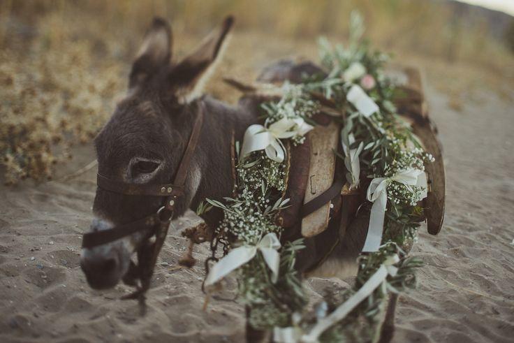 Jewish – Greek wedding on the beach in Chania Crete, Greece – love the light blog by Andreas Markakis Photography in Chania Crete Greece  Donkey on the beach