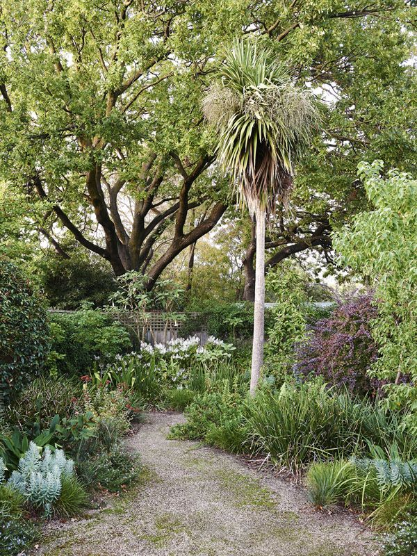 Informal gravel pathways meander through the garden. The planting is a mix of drought tolerant plants such as the purple foliaged Chinese Ba...