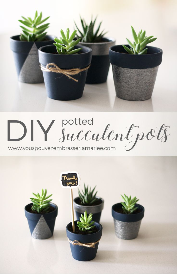 Design Succulent Planter Ideas best 25 succulent pots ideas on pinterest flower pot i think just found the perfect guest favor these adorable diy potted pots