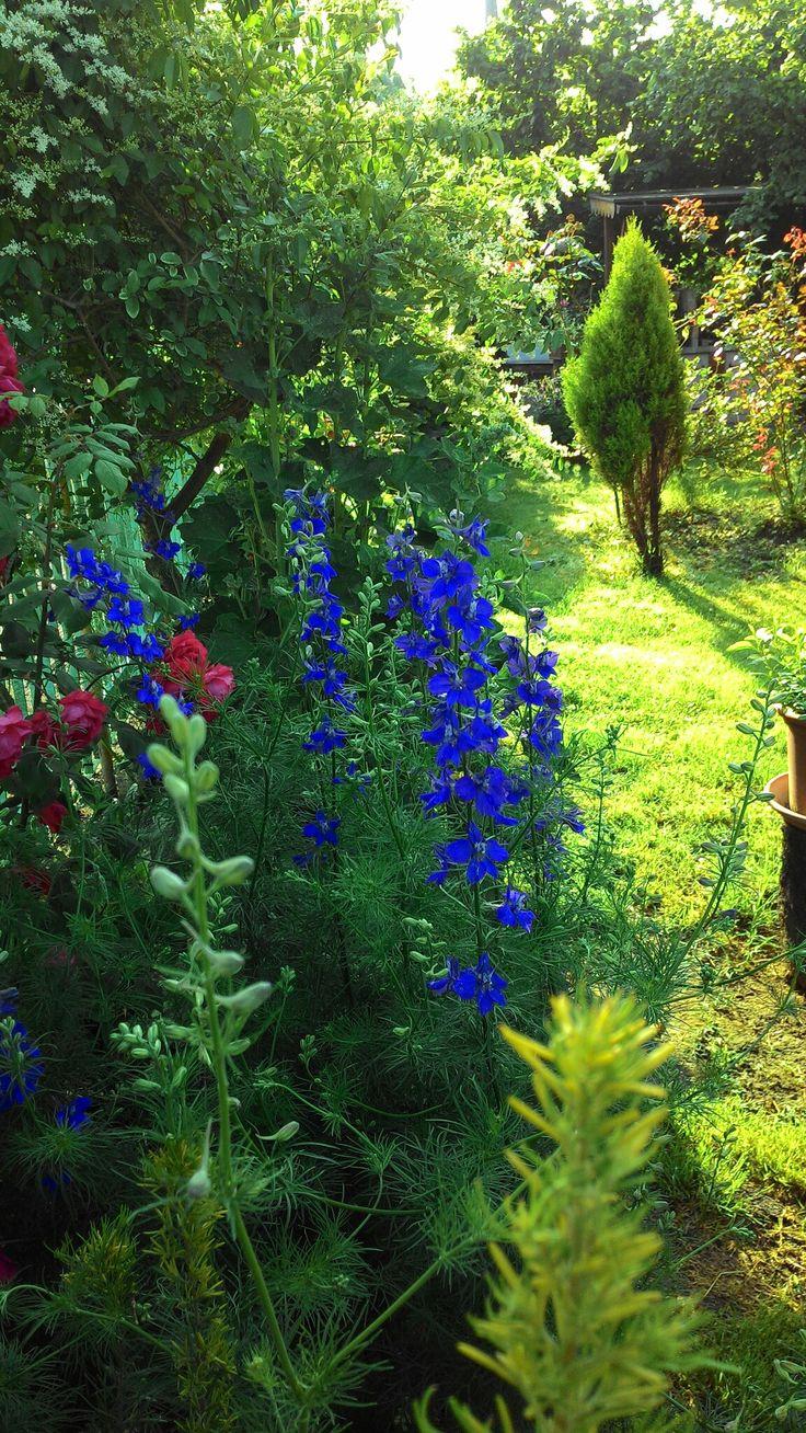 Giardino di casa mia