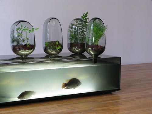 17 best images about freshwater aquarium on pinterest - Maison freshwater brewster hjorth architects ...